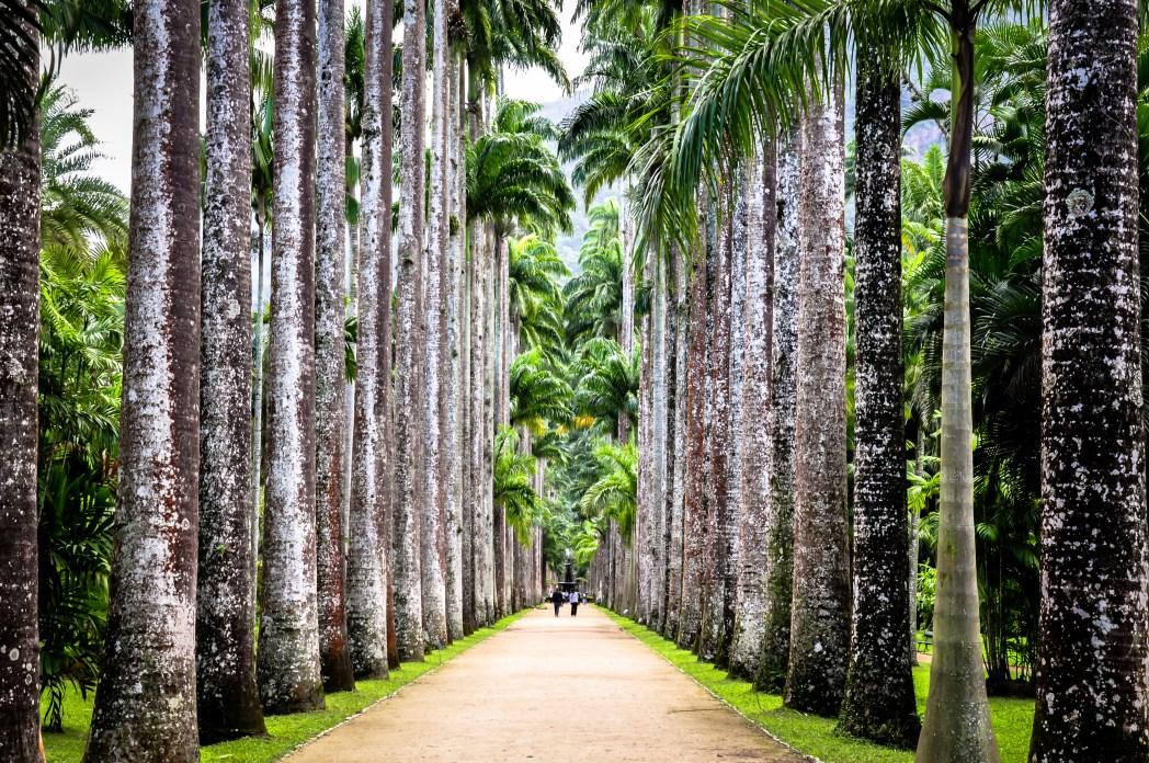 Βοτανικός Κήπος, Ρίο ντε Τζανέιρο, Βραζιλία