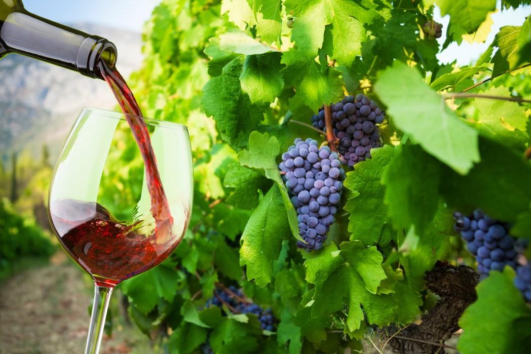 Ακολουθήστε τον Δρόμο του Κρασιού στην Κύπρο!
