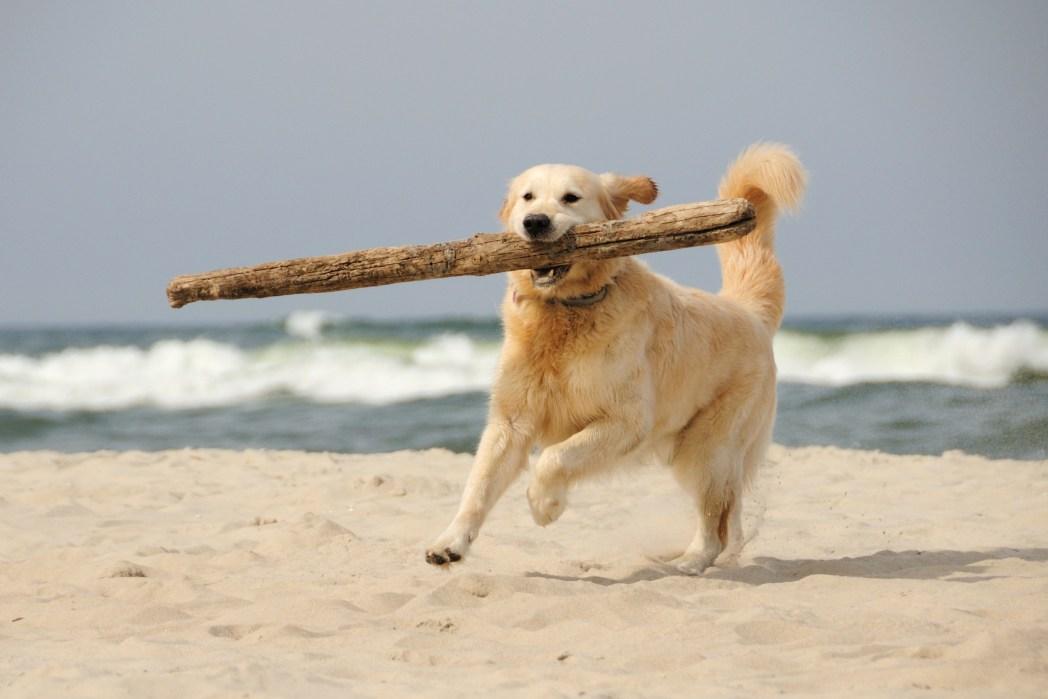 Ένας σκύλος τρέχει δίπλα στη θάλασσα