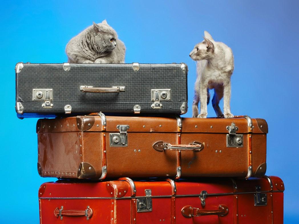 Δύο γάτες κάθονται πάνω σε τρεις βαλίτσες