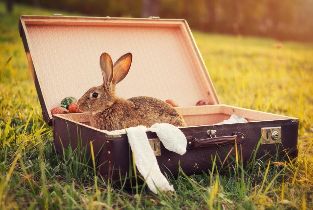 Ένα κουνέλι μέσα σε μία βαλίτσα