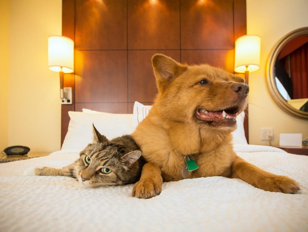 Ένας σκύλος και μια γάτα πάνω σ' ένα κρεβάτι