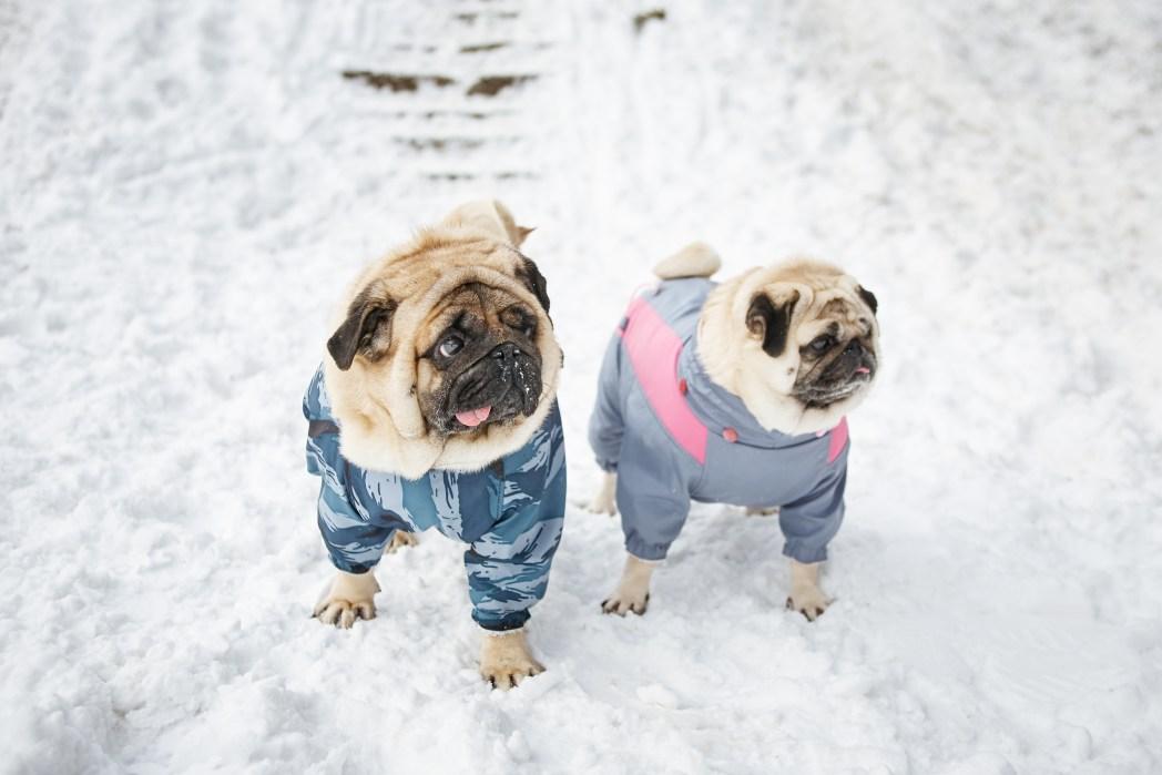 Δύο σκυλιά στα χιόνια