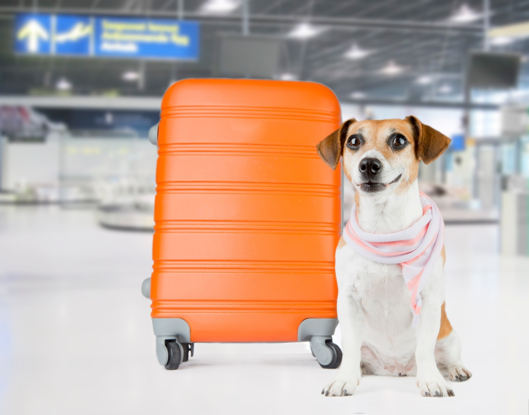 Κατοικίδια στο αεροδρόμιο